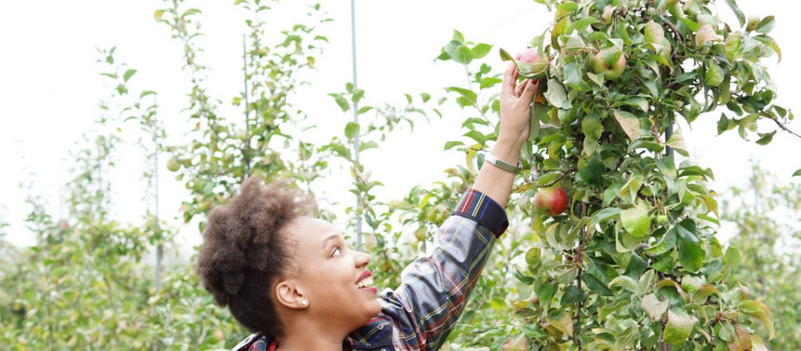 fall foliage, family road trip, adirondacks, hicks orchard, plaid dress, apple picking